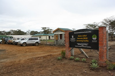 The MLND screening facility in Naivasha. It is meant to address issues on maize. [Photo: Njenga Hakeenah]